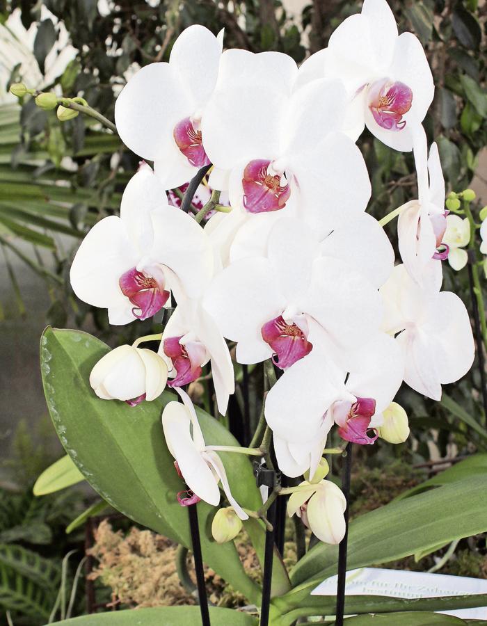 wundersch ne orchideen im luzerner garten. Black Bedroom Furniture Sets. Home Design Ideas