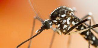 fliegengitter-mueckenschuzt tigermuecke