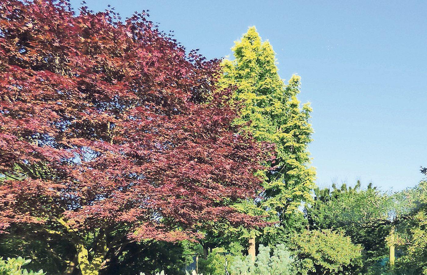 Schattenliebende Pflanzen schattenspendende schattenliebende pflanzen rontaler ch