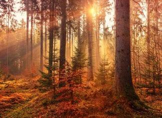Herbst by unsplash.com